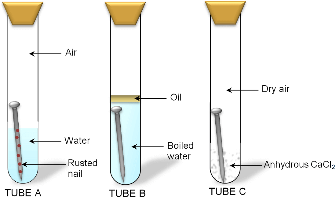 a hypothesis on the experiment of rusting process of iron depending on bacterial action The process by which dna directs the synthesis of proteins, includes two stages: transcription and translation  sits along an intron releasing the iron, which is.